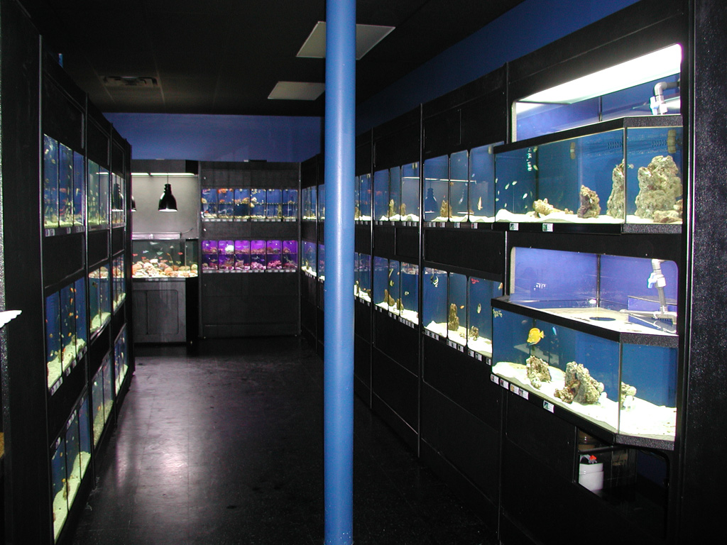Exotic aquatics dallas aquarium dallas fish store for Tropical fish shop
